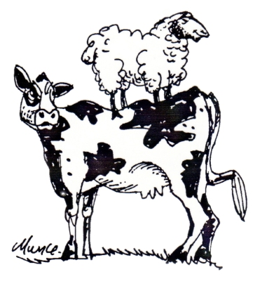 bovine (2)